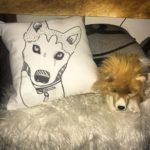 Il cuscino con Floyd