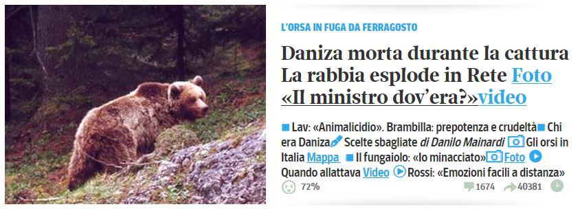 daniza orsa