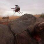 elefante ferito 3