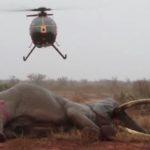elefante ferito 7