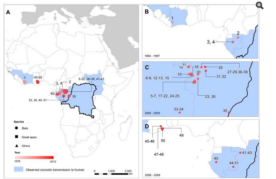 Localizzazione delle infezioni da virus Ebola negli animali (fonte: http://www.ncbi.nlm.nih.gov/)