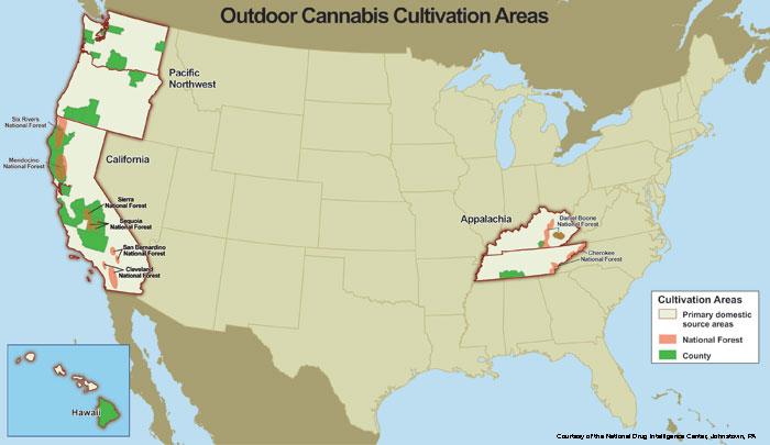 marijuana produzione distribuzione 1
