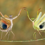 national geographic contest 1 (3)