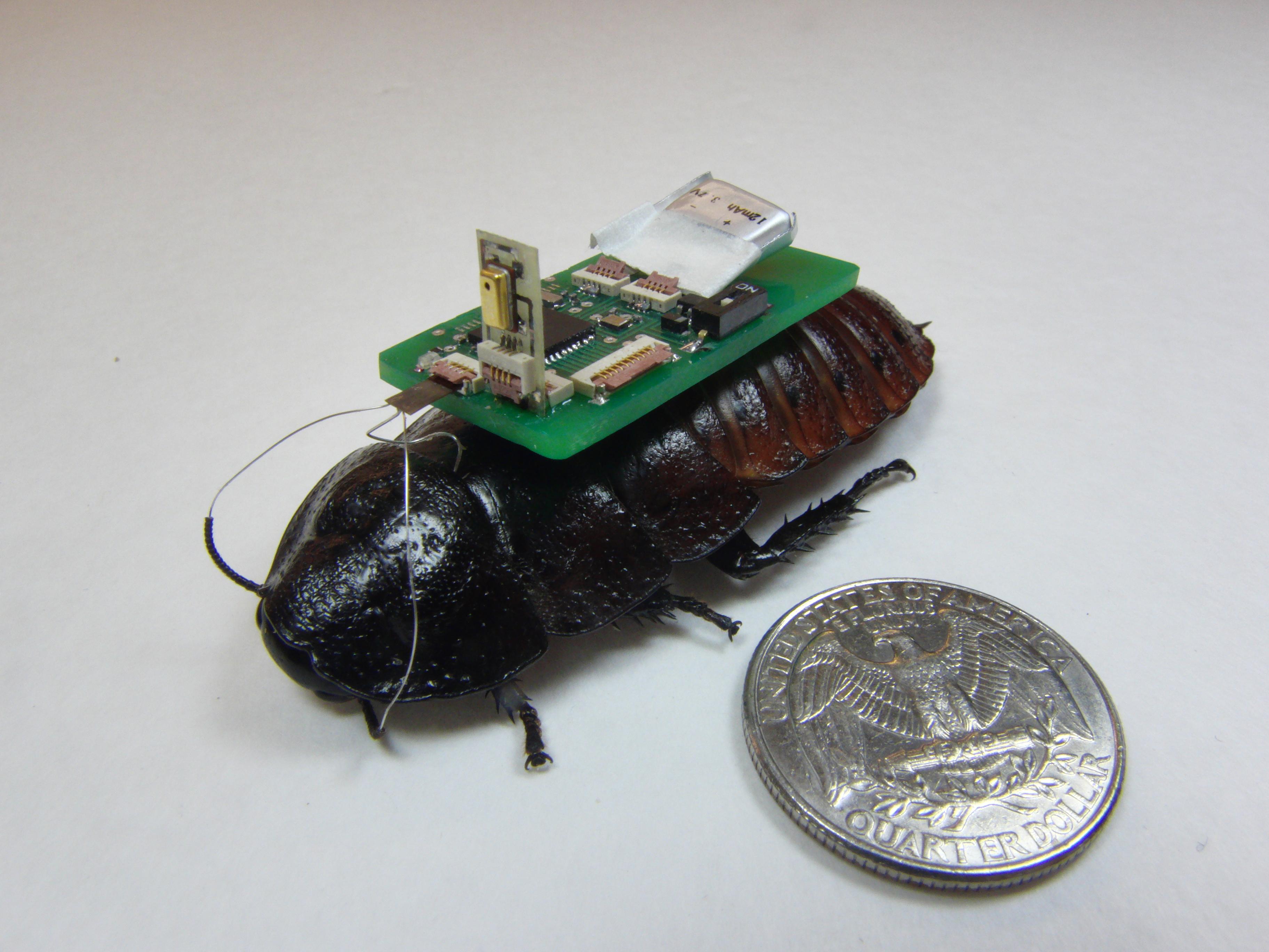 scarafaggio cyborg