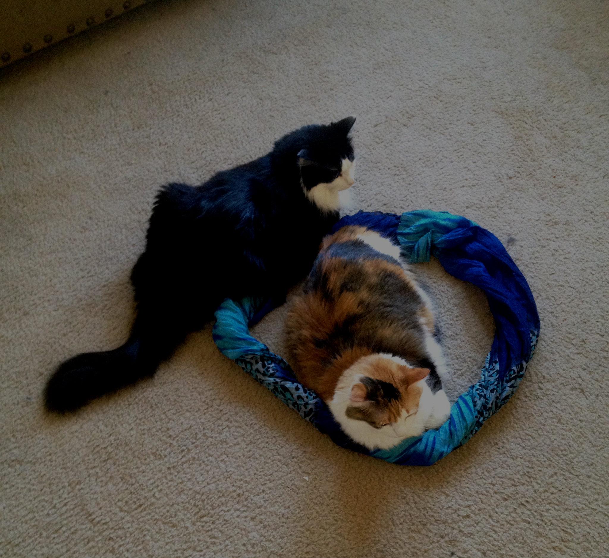Due gatti nello stesso cerchio? Rischioso (via imgur.com)