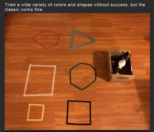 La scatola resta la preferita per i gatti (via imgur.com)