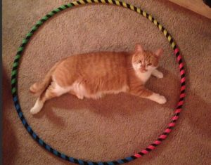 cat circles - 9