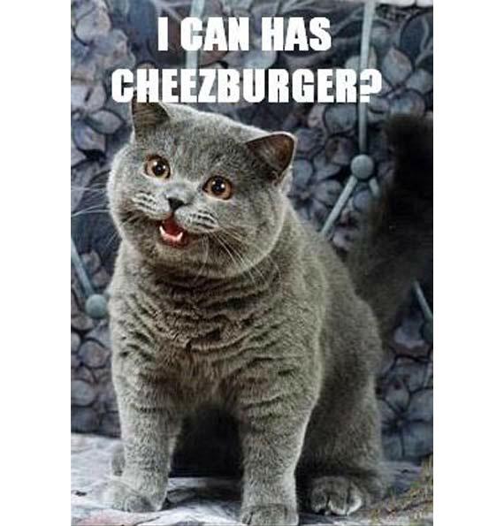 La storia della domesticazione del gatto in un'immagine.