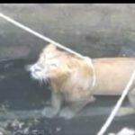 leone pozzo 1