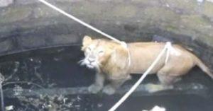leone pozzo