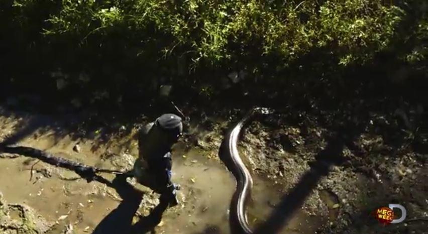 paul rosolie anaconda