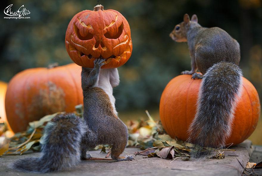 scoiattoli zucche 1