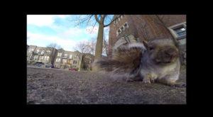 scoiattolo ruba telecamera