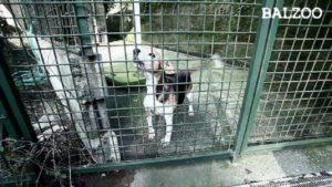 reati contro animali depenalizzazione