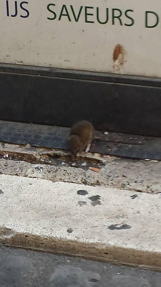 topo via delle coppelle