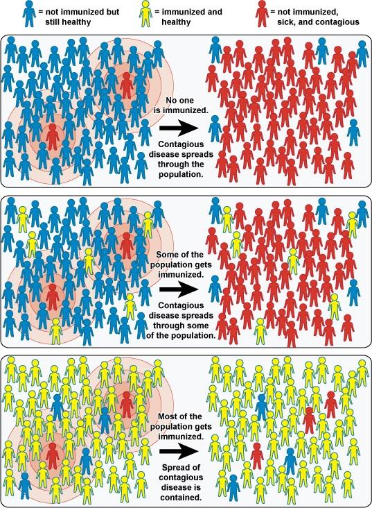 Immunità di branco