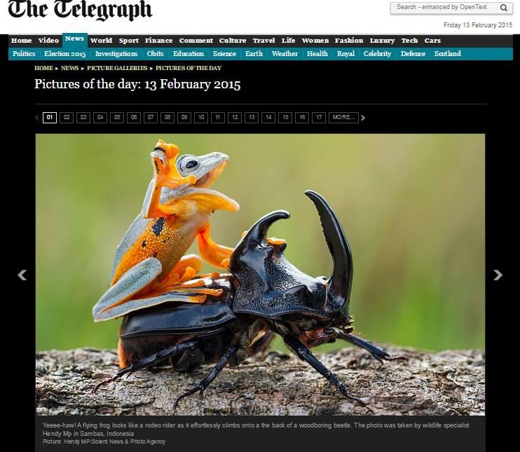 La foto della rana sul coleottero apparsa sul Telegraph (fonte: Hendy Lie via Facebook.com)