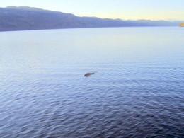 """L'ultima """"foto"""" del mostro di Loch Ness"""
