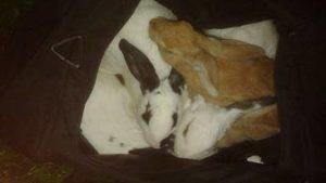 fronte animalista conigli 3