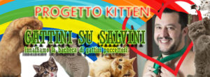 gattini su salvini