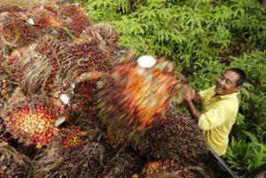 olio di palma report expo copertina