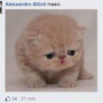 salvini gattini 1