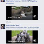 salvini gattini 5