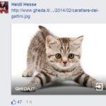 salvini gattini 8