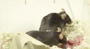 sperimentazione animale copertina
