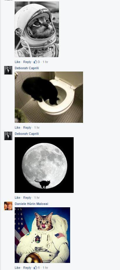 Uno degli oltre 9000 commenti di gattini che hanno intasato la Lucarelli