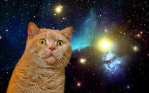 gattini spazio lucarelli cristoforetti