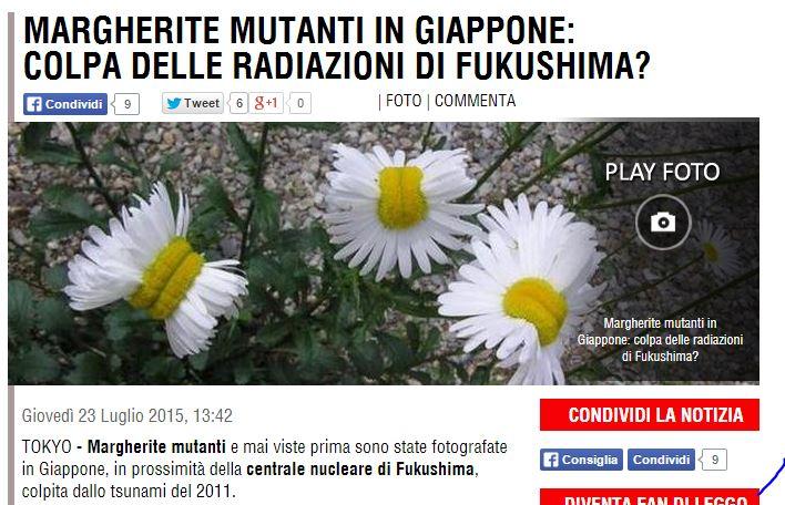 margherite fukushima bufala 1