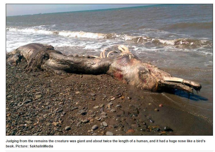 La carcassa dell'animale spiaggiato a Sakhalin (http://siberiantimes.com/ via shakalinmedia.ru)