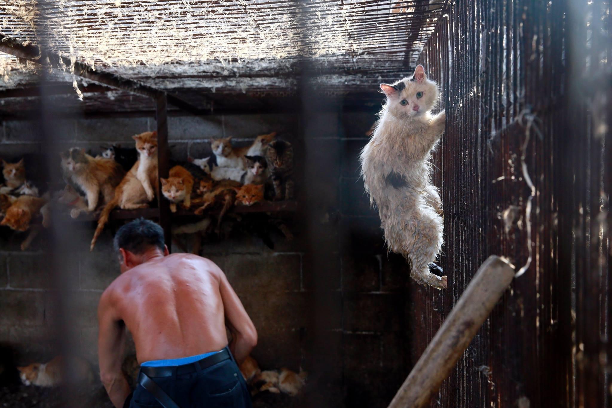 Il gatto Huru a Yulin (fonte: Facebook.com)