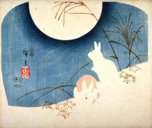 coniglio lunare