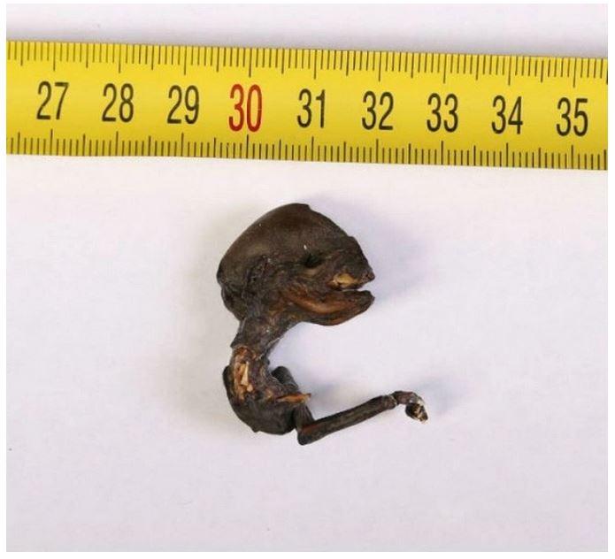La misteriosa creatura trovata in Russia
