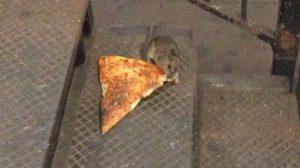 pizzarat - 1