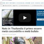 mezzo coccodrillo mezzo bufalo meteo 1