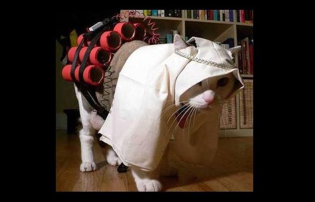 abu miaou gattini di bruxelles