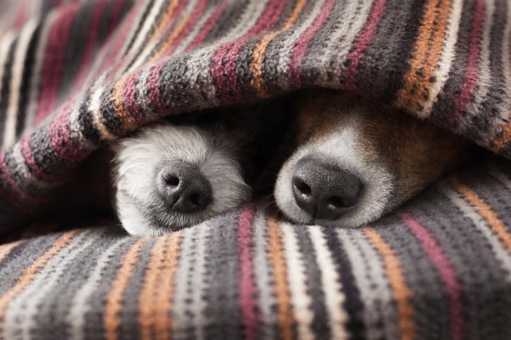 amore tra cani
