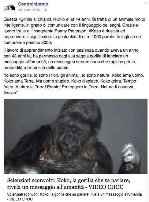 gorilla koko cop21 controinformo - 1