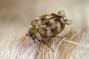 insetti zoo abitazioni ricerca - 1