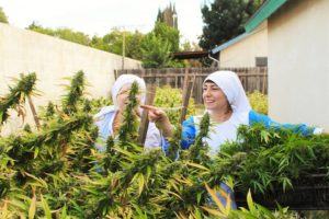 suore cannabis terapeutica sisters of the valley - 1