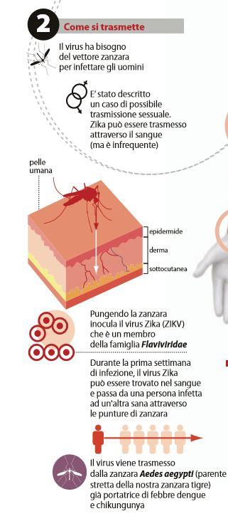 virus zika 2