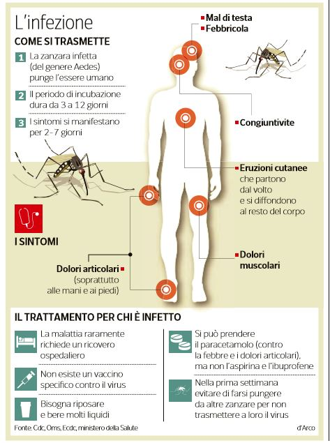 virus zika infezione