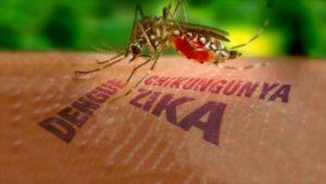 virus zika italia 1