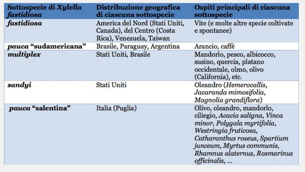 xylella fastidiosa ordinanza pm lecce - 1