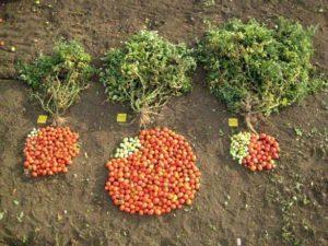 OGM presa diretta - 1