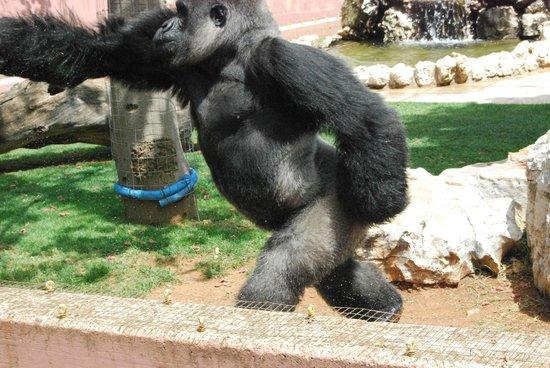 zoo fasano