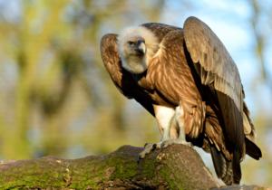 avvoltoi omosessuali zoo stepchild adoption - 1